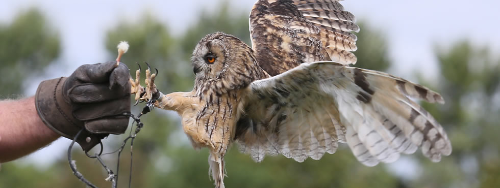 Hawkwalk Falconry Oxfordshire British Birds Of Prey Experience
